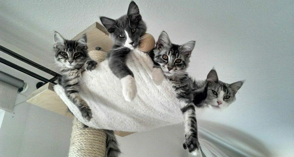 mehrkatzenhaushalt wertvolle grundregeln