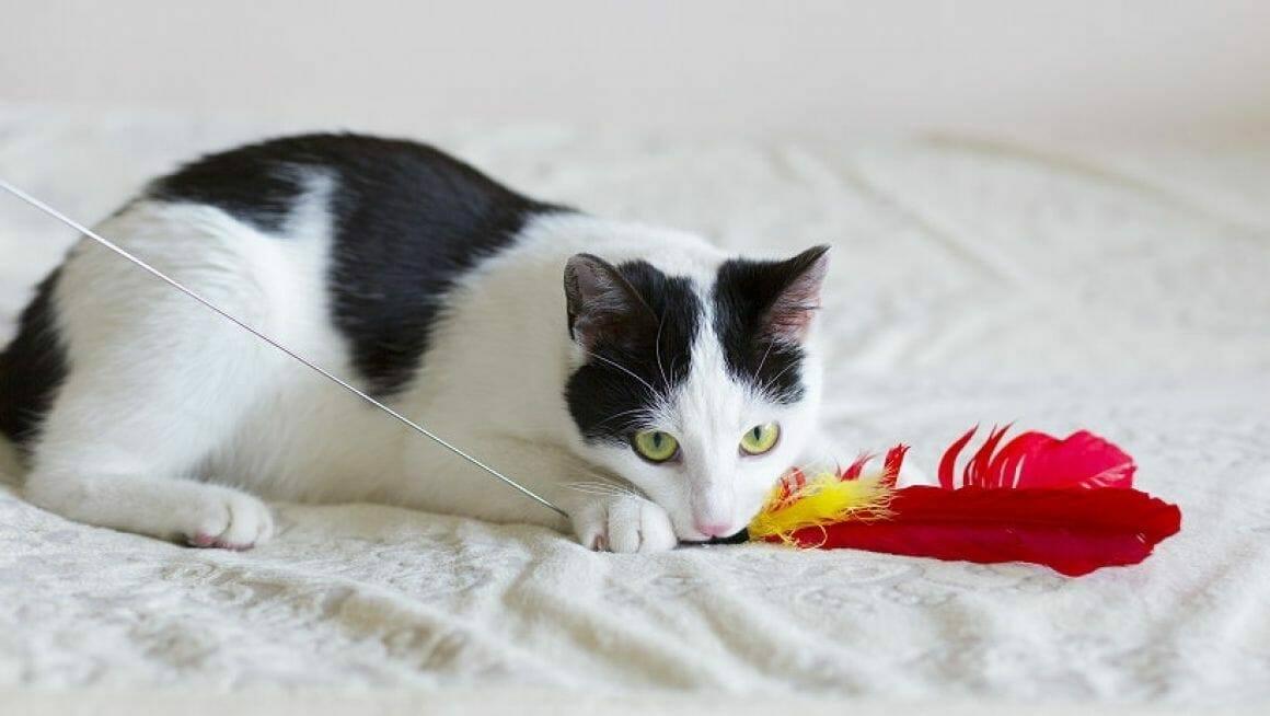 Mit Katzen richtig spielen