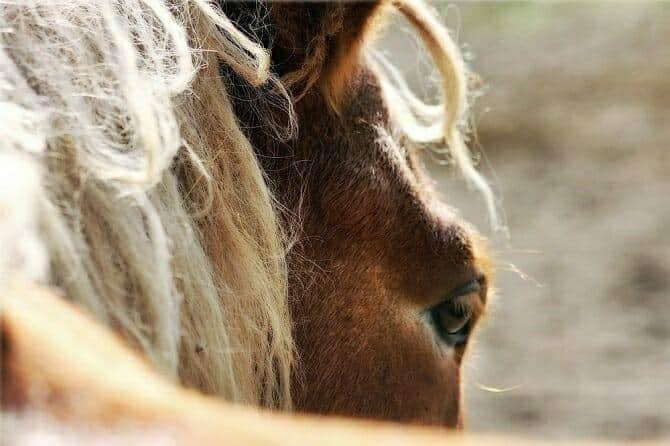 Pferdeverhaltensberater Ausbildung - Auge eines Pferdes
