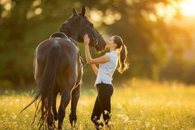 Pferdeverhaltensberater Ausbildung - junge Frau mit gesatteltem Pferd bei Sonnenuntergang auf einer Wiese