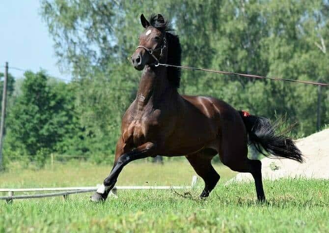 Pferdeverhaltensberater Ausbildung - Pferd erschreckt sich an der Longe auf grüner Wiese