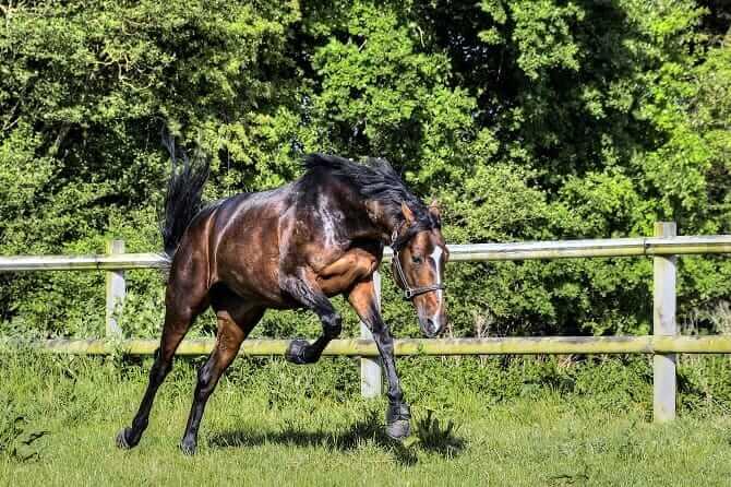Pferdeverhaltensberater Ausbildung - Pferd macht Luftsprünge auf der Weide
