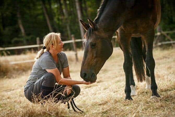 Pferdeverhaltensberater Ausbildung - Vertrauensmoment zwischen Frau und Pferd auf vertrockneter Weide