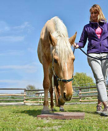 pferdeverhaltensberater ueber den beruf atn pferdeverhaltensberater reportage 6