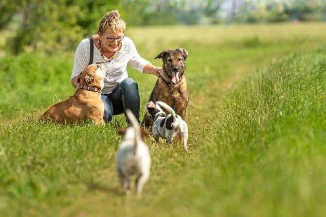 Psychologischer Coach Mensch Tier Beziehung Ausbildung - Dog Walker mit 4 Hunden in der Natur