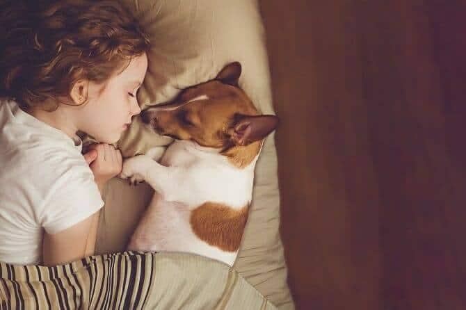 Psychologischer Coach Mensch Tier Beziehung Ausbildung - Kind und ihr Jack Russel schlafen