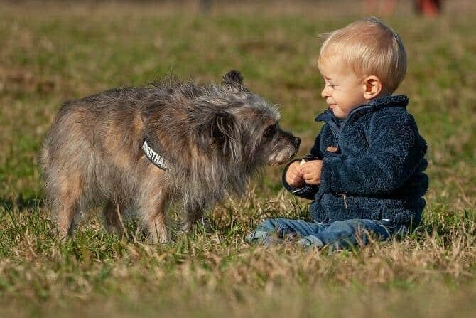 Psychologischer Coach Mensch Tier Beziehung Ausbildung - Kleinkind mit Hund auf Wiese