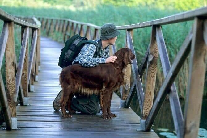 Psychologischer Coach Mensch Tier Beziehung Ausbildung - Mann mit Irish Setter auf Holzbrücke