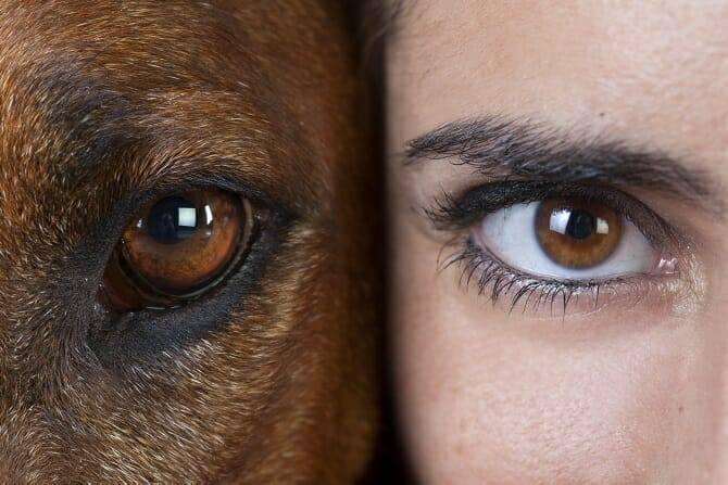 Psychologischer Coach Mensch Tier Beziehung Ausbildung - Studio Portrait Auge eines rhodesian ridgeback neben Aug einer Frau