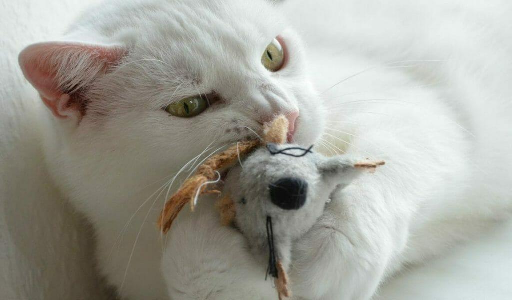 psychosomatische erkrankungen bei katzen jagd und spieltrieb wollen ausgelebt werden