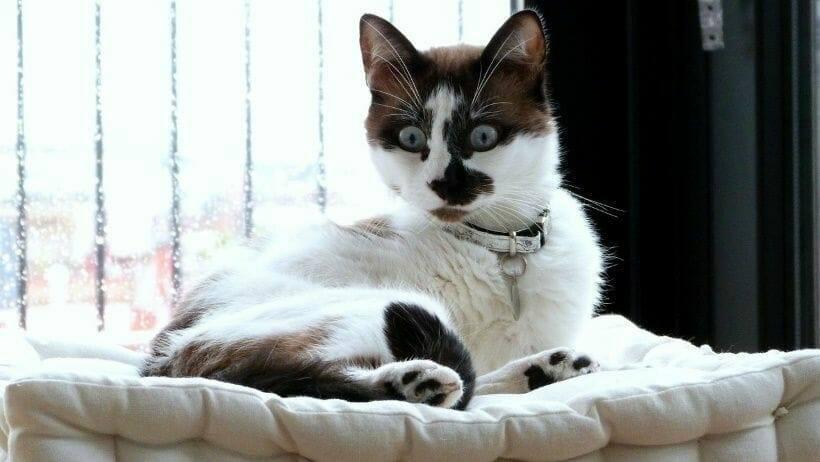 reaktion auf boeller bei katze