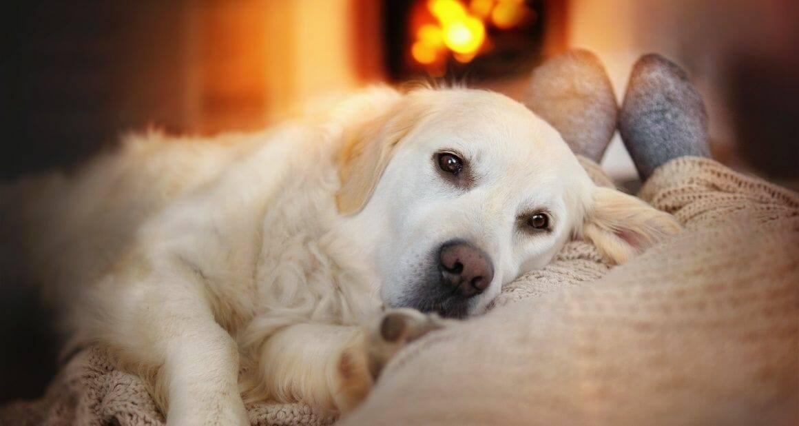Silvester mit Hund: Tipps für kurzfristige Hilfe
