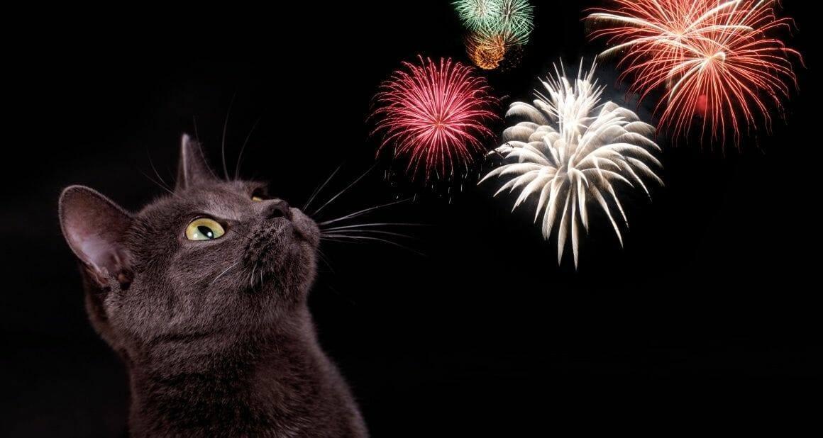 Silvester mit Katze: Es geht los!