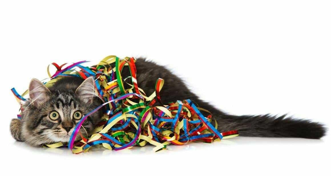 Silvester mit Katze - Rechtzeitige Vorbereitung