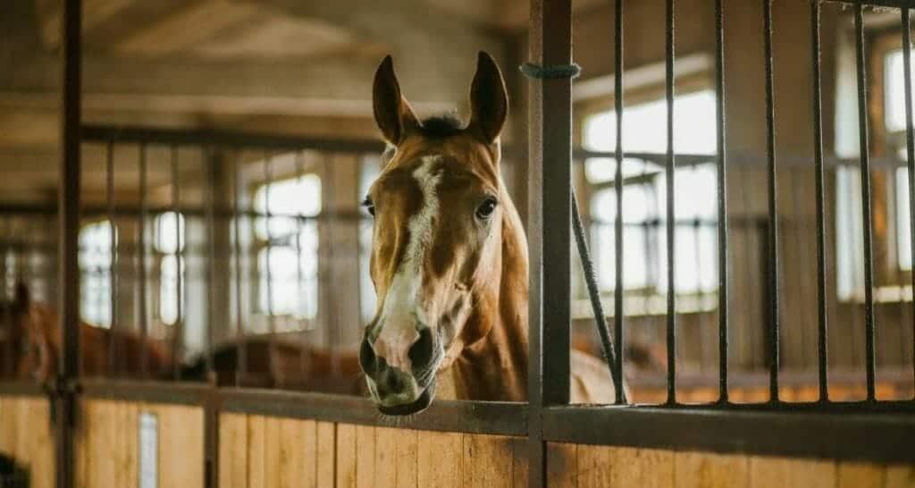 silvester pferde und stall richtig vorbereiten