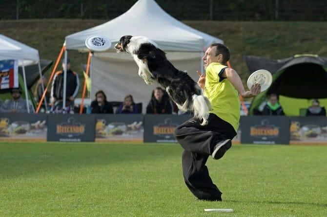 Sportwissenschaften Hund Ausbildung - Dog Frisbee Wettkampf