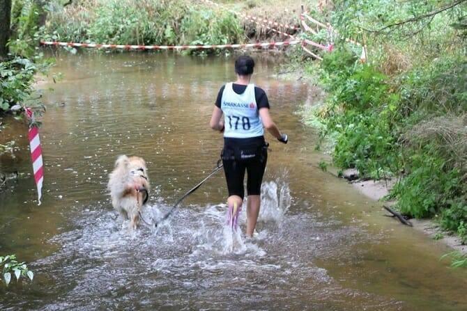 Sportwissenschaften Hund Ausbildung - Hund und Frau beim Laufwettkampf durchs Wasser