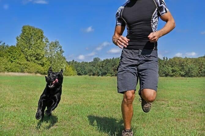 Sportwissenschaften Hund Ausbildung - Mann joggt mit Hund im Park