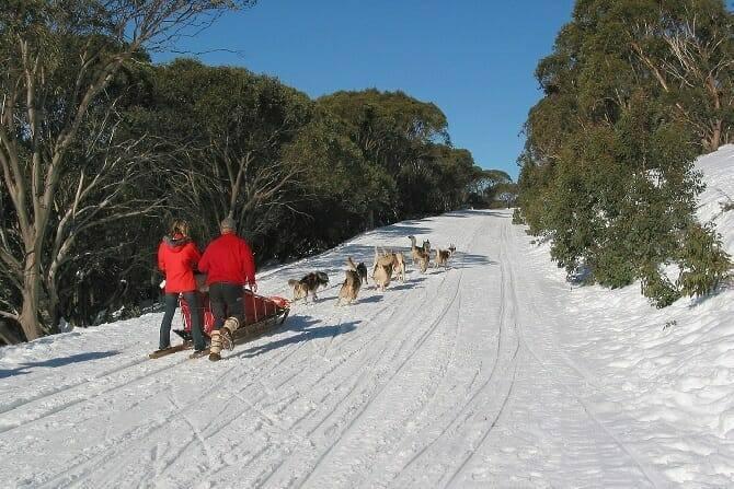 Sportwissenschaften Hund Ausbildung - Schlittenhunde mit Schlitten im Winter