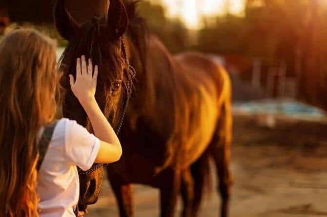 Tiergestützte Arbeit Ausbildung - junges Mädchen mit langen blonden Haaren streichelt Pferd bei Sonnenuntergang