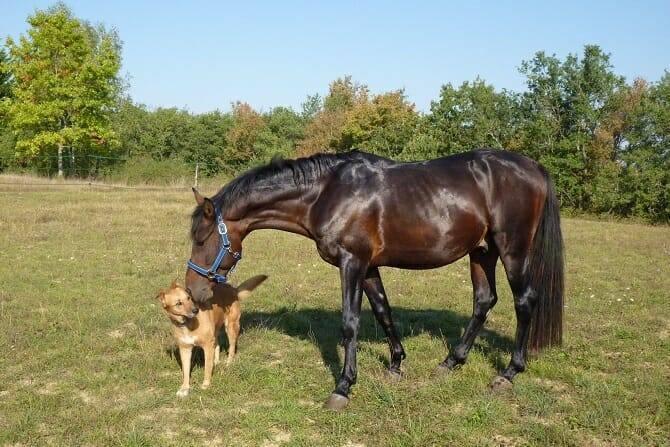 Tierpsychologie Ausbildung - Hund wird von dunklem Pferd auf einer Wiese beschnuppert