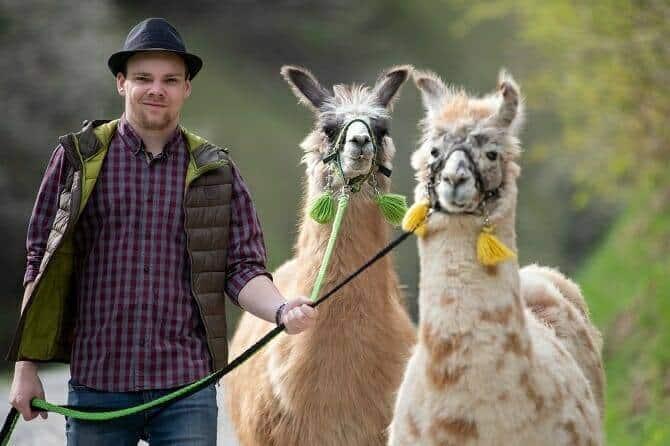 Tiertrainer Ausbildung - junger Mann mit Hut führt zwei Lamas