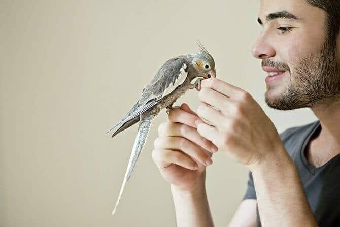 Tiertrainer Ausbildung - Mann spielt mit seinem Sittich in der Wohnung
