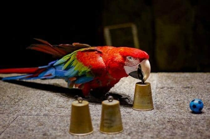 Tiertrainer Ausbildung - Papageitraining