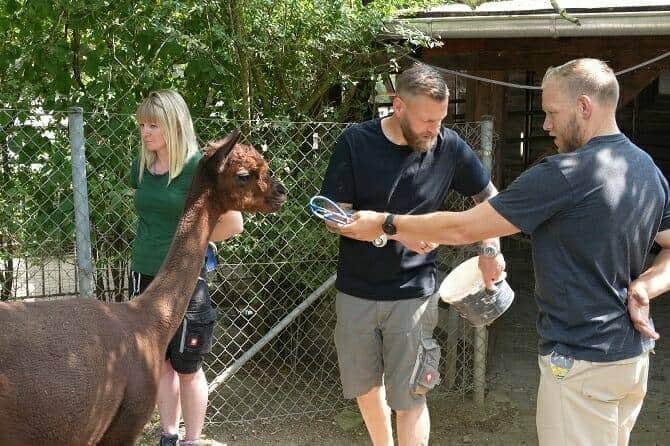 Tiertrainer Ausbildung - zwei Männer und eine Frau mit einem Alpaka im Zoo