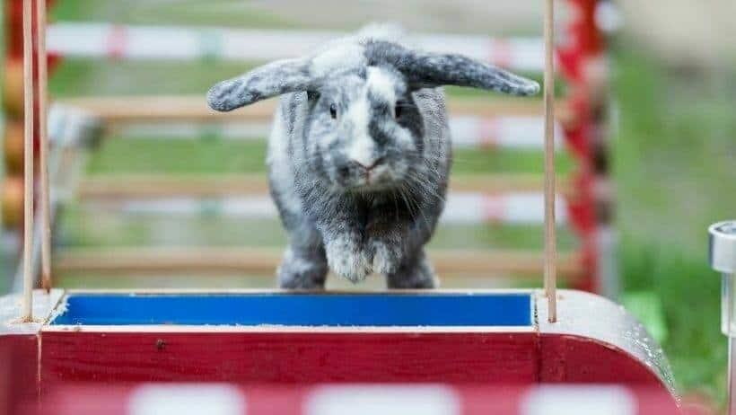 tiertraining mit haustieren wie etwa kaninchen