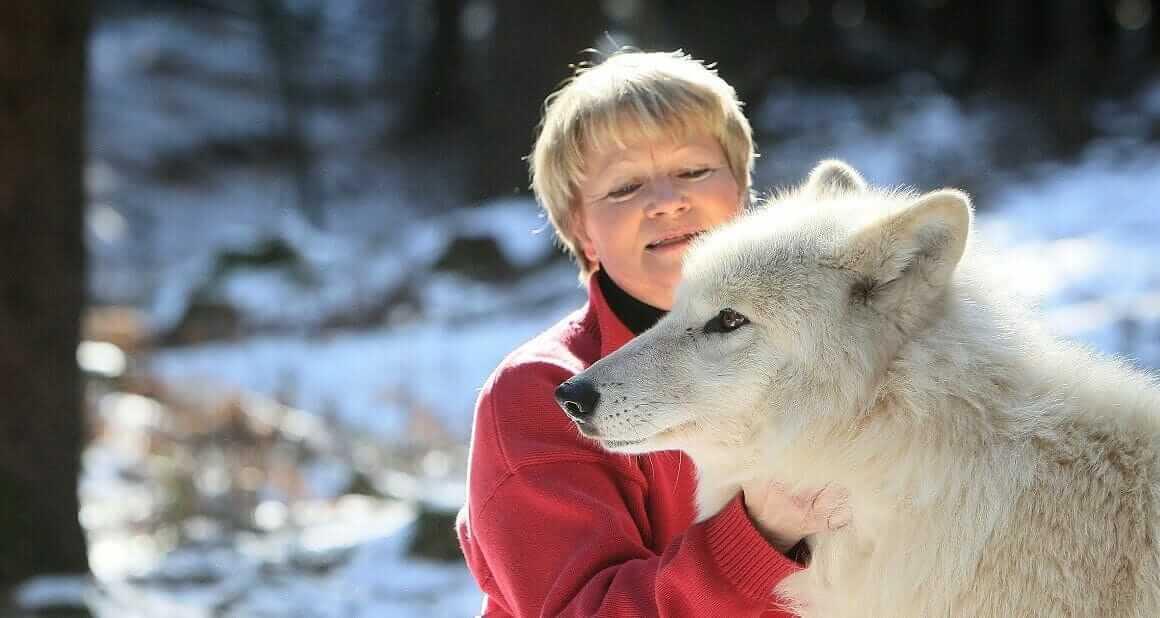 Wolfsangriffe - Fakt oder Fiktion?