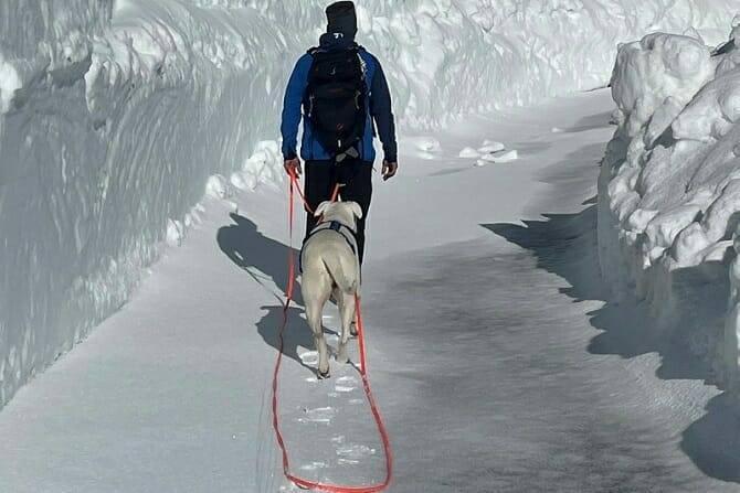 Sportwissenschaften Hund Ausbildung - Hund und Mann auf Gletscherwanderung