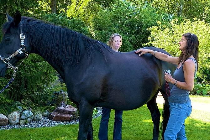 Ausbildung an der Partnerschule ATM - Tierheilpraktiker Pferd