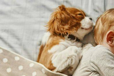 Psychologischer Coach Mensch Tier Beziehung Ausbildung - Baby und Hundewelpe schlafen friedlich